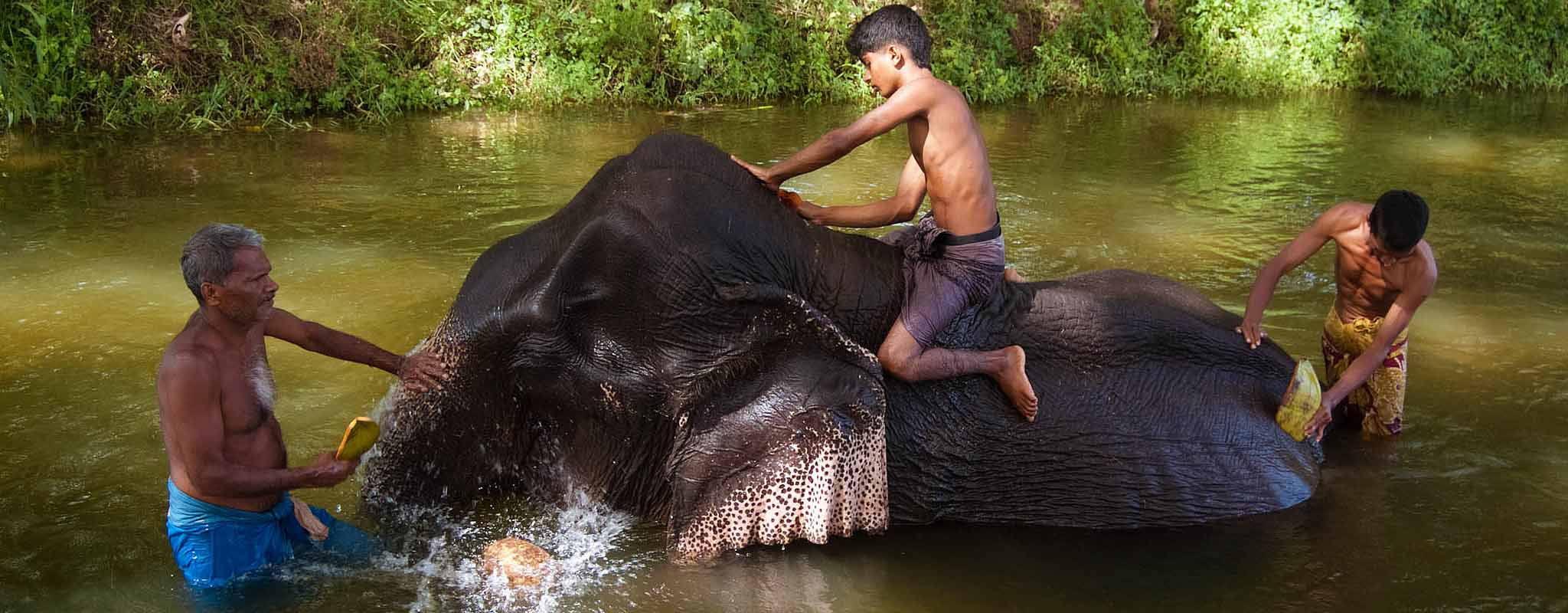 bathing elephant-boy wash an elephat