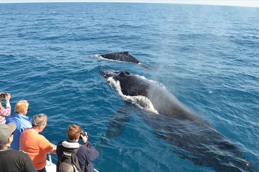 Blue whale watching in Mirissa