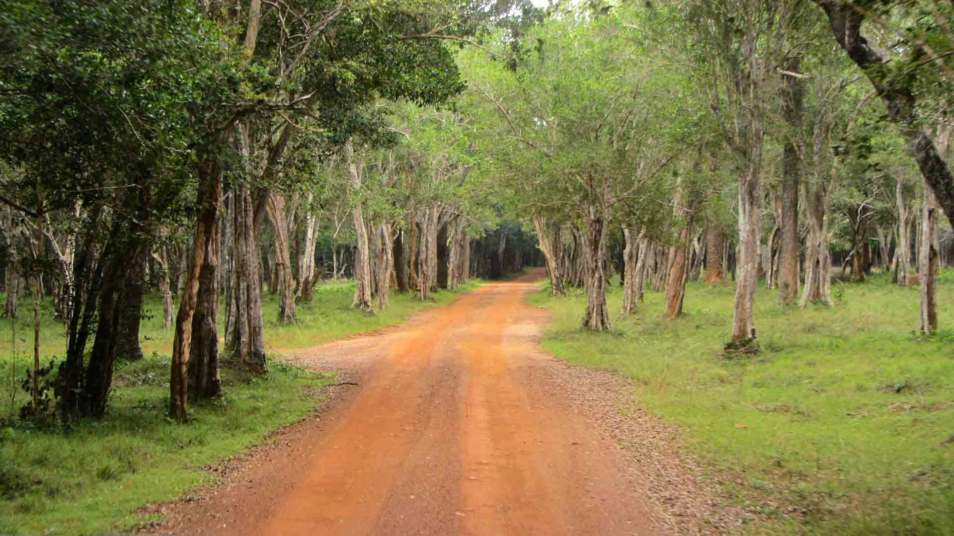 Wilpattu national park trail