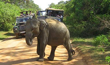 Full day Safari game drive in Sri Lanka